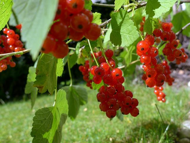 Csöves öntözőrendszer növénytermesztéssel