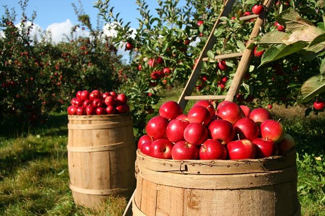 Tudni kell az almáról, hogy…