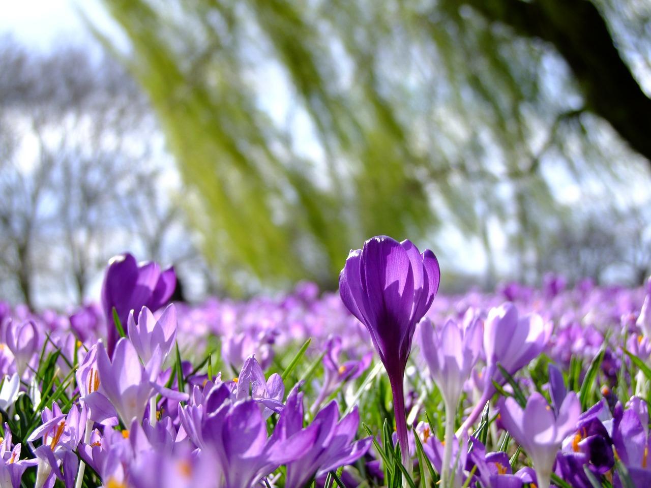 Mit jelentek a virágok színei otthonában?
