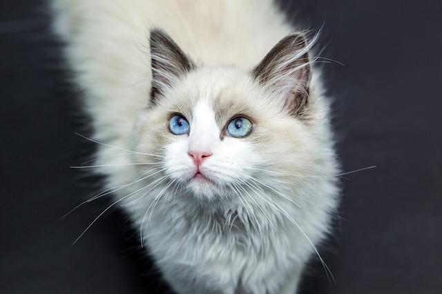 A cicánk az egészségre is hatással lehet
