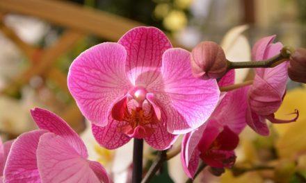 Virággal vidáman és frissen